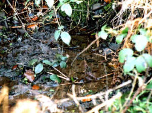 Broomhill Spring