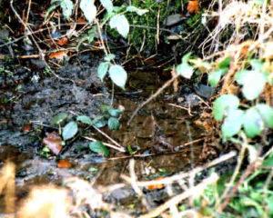 Broomhill Spring, Malvern