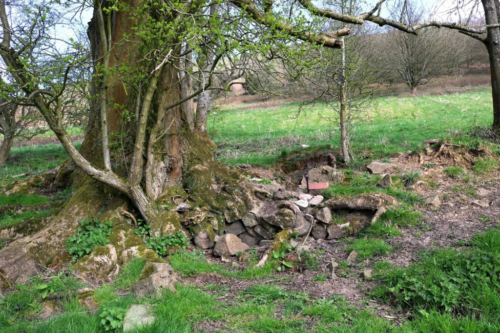 Approaching the ash tree with its jumble of rocks and bricks around the base