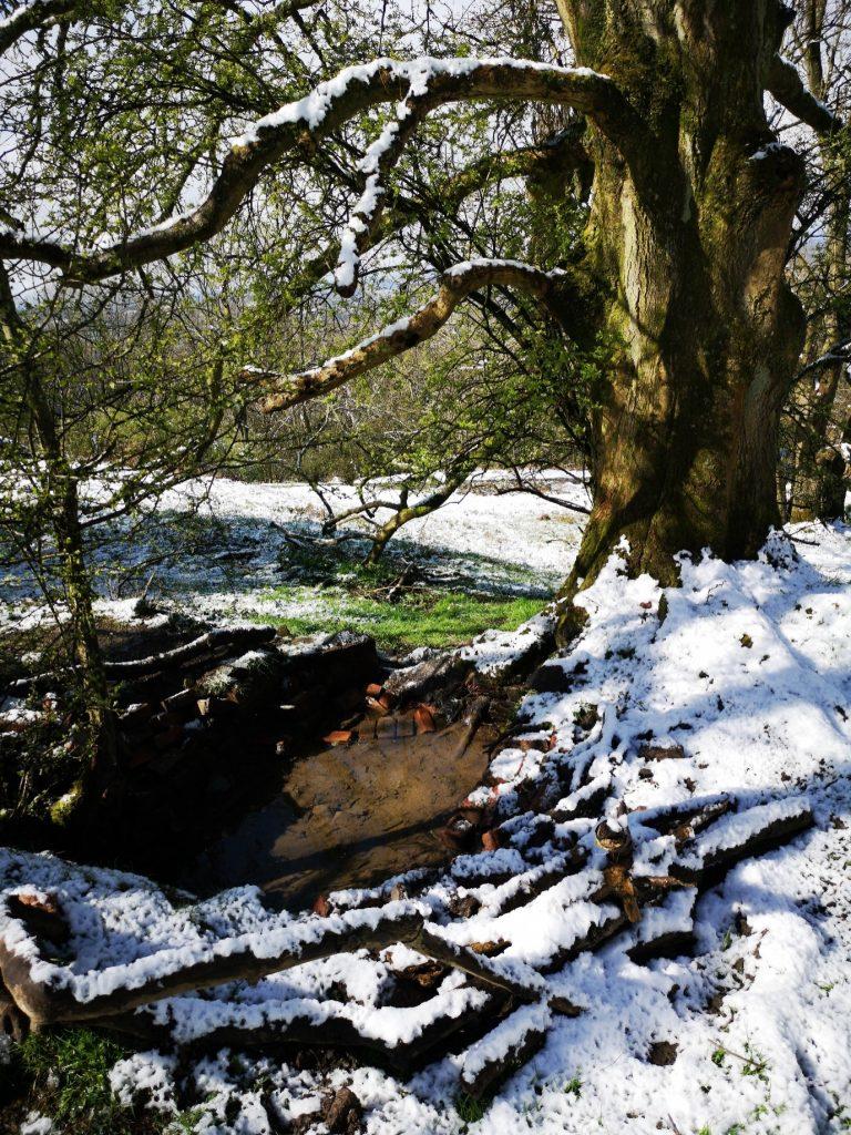 Ash Tree Pool in winter - photograph by Jan Sedlacek @digitlight